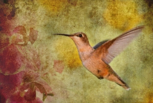 Custom Artwork - Hummingbird Orchid* by Barefoot Basics
